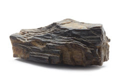 Fossilized wood Stock Photos