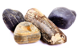 Fossill and rocks Stock Photography