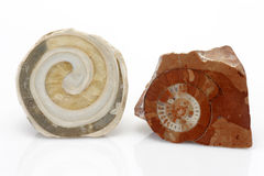 Fossils Stock Images
