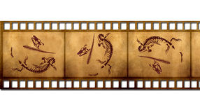 Fossils. In the old film Royalty Free Stock Image