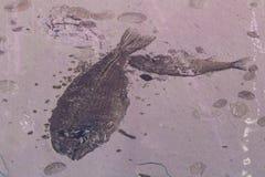 fossils Imagens de Stock