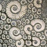 fossils Fotografia de Stock
