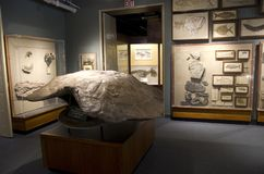 Turtle fossil in Harvard Museum of Natural History stock photography