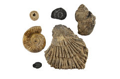 Fossils Royalty Free Stock Photography