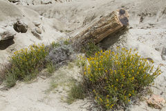 Fossils and flowers at La Leona Petrified Forest, Argentina Stock Photos