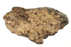 Fossils Galore In This Rock. Many fossils in this rock found by a river bed Stock Image