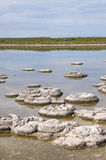 Fossils: Lake Thetis, Western Australia Royalty Free Stock Photography