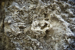 Fossils in the limestone rock Royalty Free Stock Images