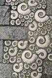 Fossils. In Lyme Regis, Dorset Stock Photos