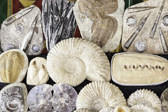 Fossils in an old market Royalty Free Stock Images