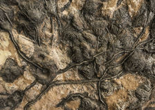 Fossils of plants. Fossil of a Prehistoric flowers Stock Image