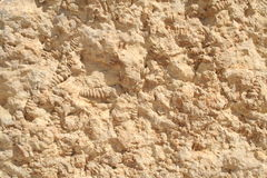 Fossils from Ramon crater. Fossils in rock from Ramon Crater, Negev desert, Israel, seen at Mitzpe Ramon Royalty Free Stock Photography