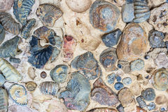 Fossils in a Rock Stock Photos