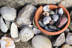 Fossils and Rocks. A Collection of Fossils and Rocks Royalty Free Stock Images