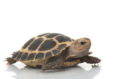 fosten sköldpaddan Arkivfoton