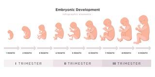 Foster- utvecklingsmånad vid månadcirkuleringen från 1 till 9 månad till födelse med embryosymboler på medicinska kvartal stock illustrationer