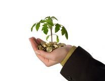 Fostering a business idea. New plant sprouting from a handful of golden coins, isolated - concept for business, innovation, growth and money Royalty Free Stock Photos