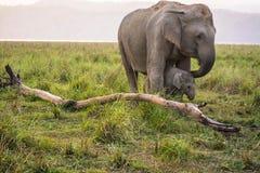 Fostra & behandla som ett barn elefanten Arkivfoto
