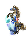fostra för häst Arkivbild