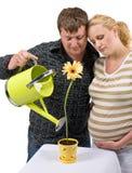 fostra för parlivstid fotografering för bildbyråer