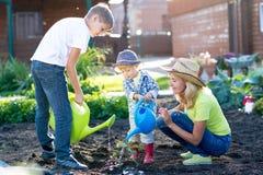 Fostra med två barnsöner som planterar ett träd och tillsammans bevattnar det i trädgård Royaltyfria Foton