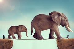 Fostra och behandla som ett barn elefanten på en spänd lina Royaltyfri Foto