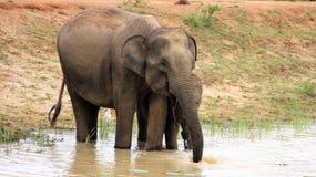 Fostra och behandla som ett barn elefanten på träsk royaltyfri foto