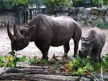 Fostra och behandla som ett barn noshörningen Arkivbilder