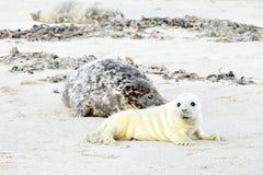 Fostra och behandla som ett barn skyddsremsan på stranden Fotografering för Bildbyråer