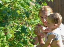 Fostra och hennes dotter som äter hallon i trädgården fotografering för bildbyråer