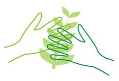 fostra växter Arkivbilder