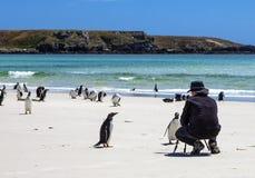 Fotógrafo com os pinguins em Malvinas Islands-3 Fotografia de Stock Royalty Free