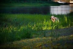 Fotógrafo da natureza Imagem de Stock