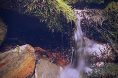 Fotógrafo da natureza do musgo e do Lichen Growth em uma pedra imagem de stock