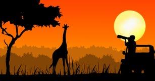 Fotógrafo de la fauna en puesta del sol ilustración del vector