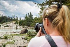 Fotógrafo de la fauna en yellowstone Imágenes de archivo libres de regalías