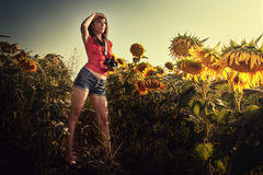 Fotógrafo de la muchacha en el campo de los girasoles imagenes de archivo