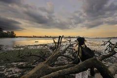 Fotógrafo de la naturaleza con la cámara Imágenes de archivo libres de regalías