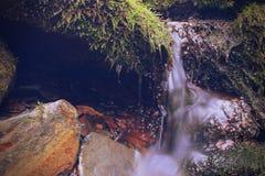 Fotógrafo de la naturaleza del musgo y de Lichen Growth en una piedra Imagen de archivo
