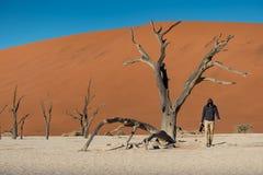 Fotógrafo de sexo masculino joven que se coloca con el árbol muerto en deadvlei Imagen de archivo