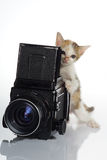 Fotógrafo del gatito Imagen de archivo