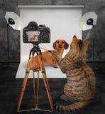 Fotógrafo del gato en el estudio 3 fotos de archivo