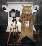 Fotógrafo del gato en estudio fotografía de archivo libre de regalías