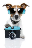 Fotógrafo do cão Foto de Stock Royalty Free