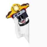 Fotógrafo do cão do turista fotos de stock royalty free