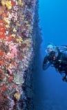 Fotógrafo e peixes subaquáticos Foto de Stock Royalty Free