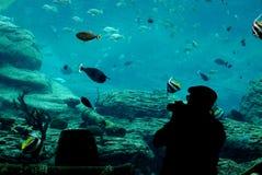 Fotógrafo en el acuario imagen de archivo libre de regalías