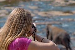 Fotógrafo fêmea dos animais selvagens fotos de stock royalty free