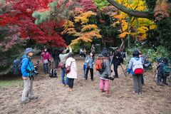 Fotógrafo japoneses Fotografia de Stock Royalty Free