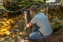 Fotógrafo na floresta úmida, Tasmânia fotografia de stock royalty free